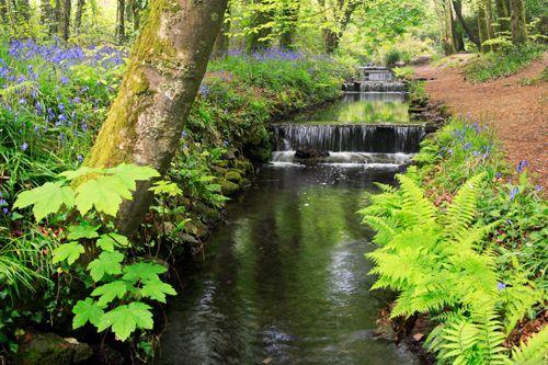 Tehidy Woods - nearby Camborne