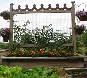 Tomato trellis love love love this next year! I think I need one for the beans, the snow peas, the cucmbers.....