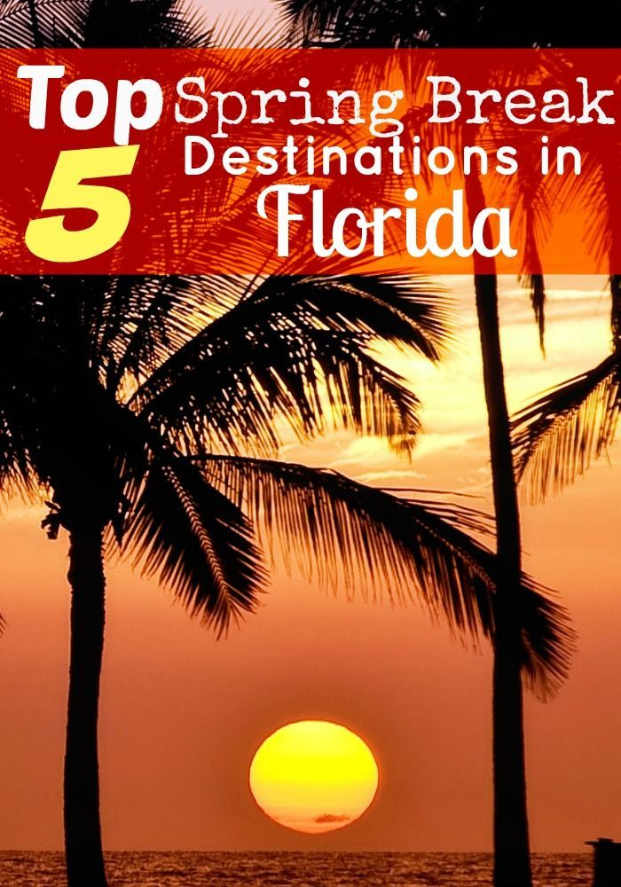 Sunshine, sandy beaches, and spring break without Daytona Beach? Check out our top 5 Spring Break Destinations in Florida!