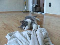 17 Best Ideas About Cat Urine On Pinterest Carpet