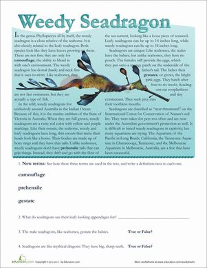 weedy sea dragon essay Explain the btn weedy seadragon story to another student 2 think of three  adjectives to describe the weedy seadragon 3 weedy seadragons are an  a  summary of what the topic is about and end with an interesting fact.