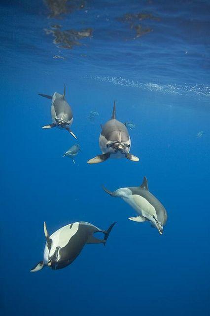 """Le #Azzorre sono isole ricche di biodiversità, sia in mare (ricco di delfini e balene) che in terra; fanno parte quindi delle """"Global 200"""", le ecoregioni che contengono la maggior parte della biodiversità del pianeta."""