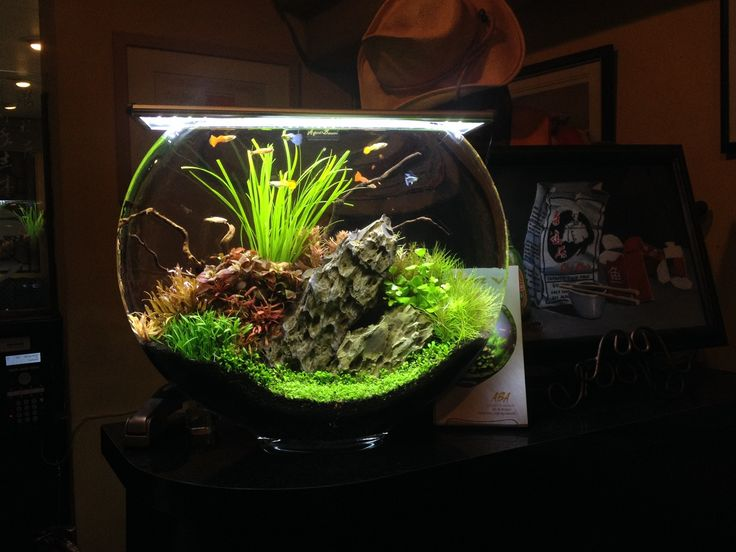 167 best planted nano aquariums images on pinterest for Cute fish tanks