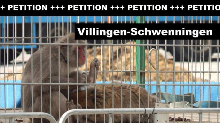 Municipal ban on wild animals in Villingen-Schwenningen required!