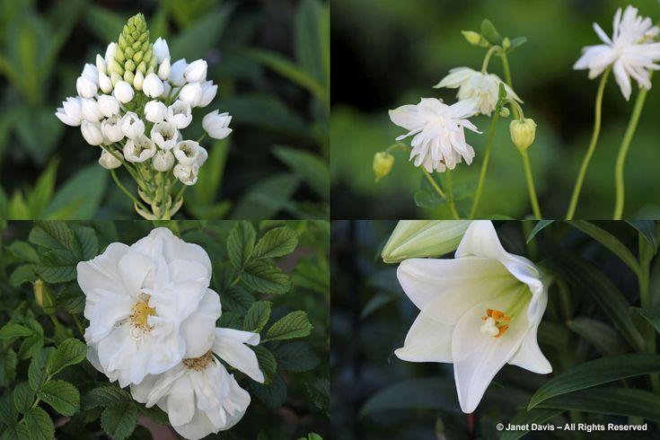 White Flowers-Stellenberg