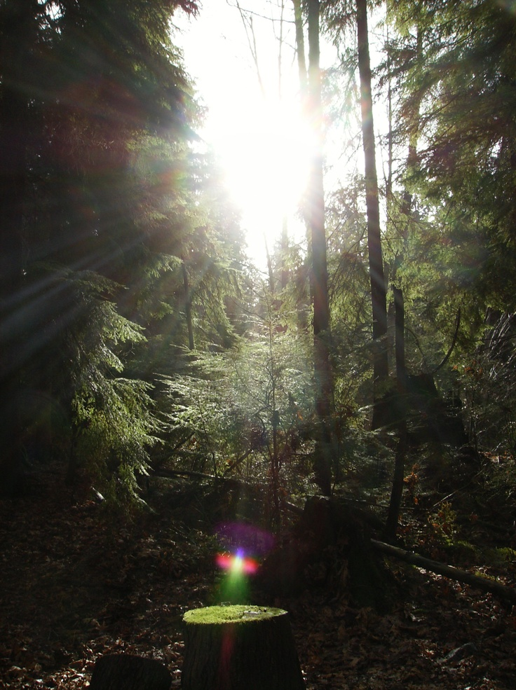 The sun breaks through the rainforest (occasionally). Stanley Park, Vancouver