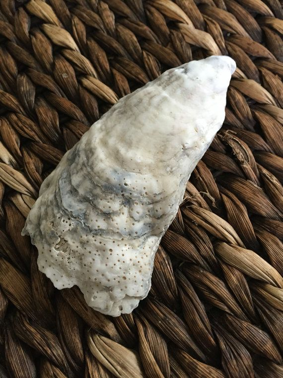 Natural Sea Shell for Sage or Incense by RedSilentWolfJewelry