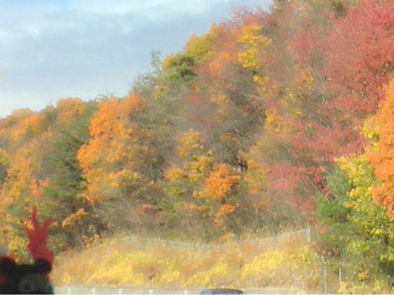 [P] 新潟へ向かう高速バスの中からとりました。11月中旬ころで紅葉がきれいでした。