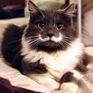 I want to get a cat and name him stanley.
