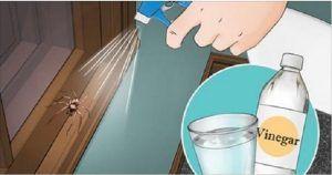 7 dicas para manter aranhas e insectos longe de casa