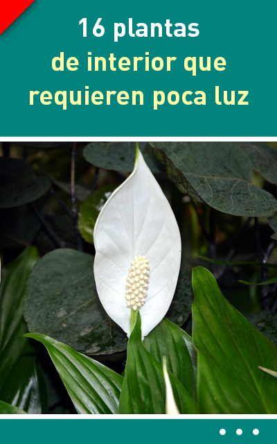 M s de 25 ideas incre bles sobre plantas de poca luz en - Plantas de interior que necesitan poca luz ...