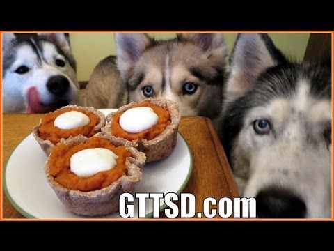 PUMPKIN PIE FOR DOGS | Dog Treat Recipe for Thanksgiving - YouTube VIDEO