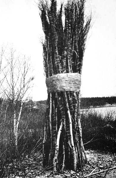 30 to 1 bound trees, 1971, Jackie Winsor