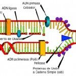 Knowing the definition of dna polymerase read more visit to www.chasepto.org