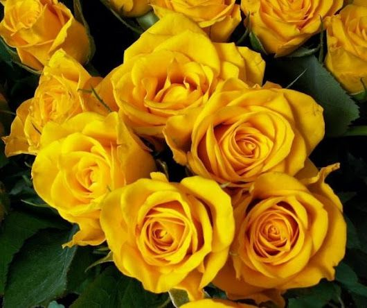 Imagen: Cuál es el significado de las rosas amarillas - 4 pasos