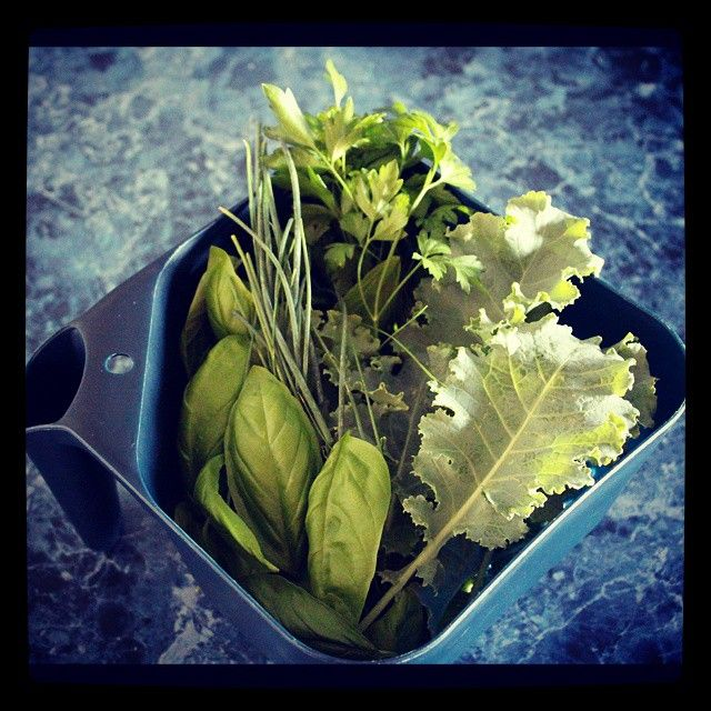 Fresh greens from the garden | A Bella Adventure | http://instagram.com/p/way7GPQHTO