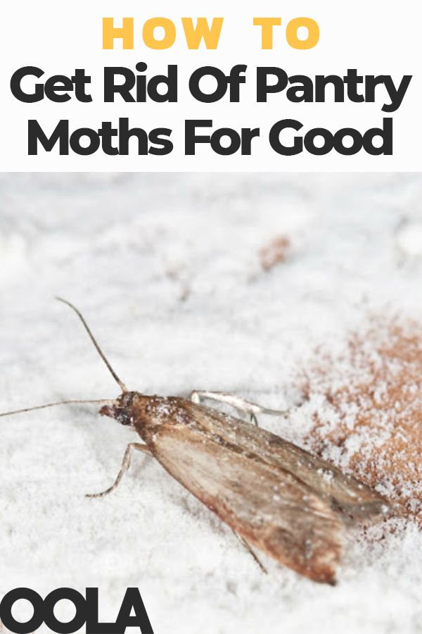 How To Get Rid Of Pantry Moths For Good Pantry Moths Moth Pantry
