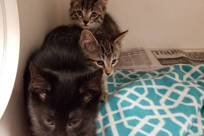 Fundraiser By Ruin Creek Animal Protection Society Of Henderson Nc Oak Kitten S Ticket To Ride Animals Ticket To Ride Kittens