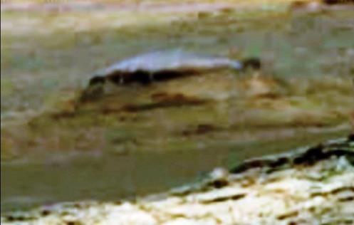 De acordo com o ufólogo Scott Waring, a anomalia misteriosa fotografada em Marte pela sonda Curiosity, seria uma descoberta surpreenden...
