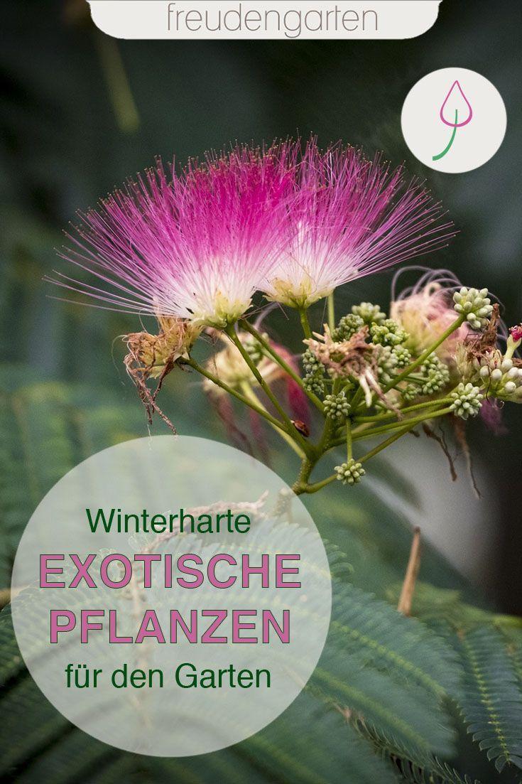 Exotische Pflanzen Im Garten In 2020 Pflanzen Exotische Pflanzen Garten