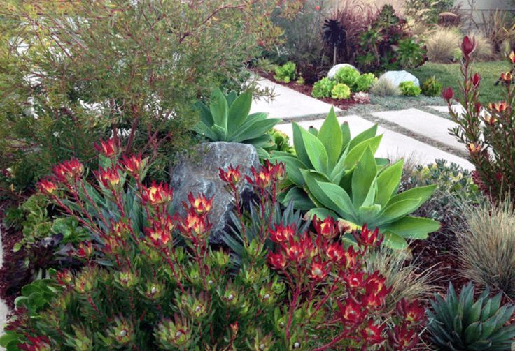 5 Ways To Create A Low-Water Garden – Kelly Page