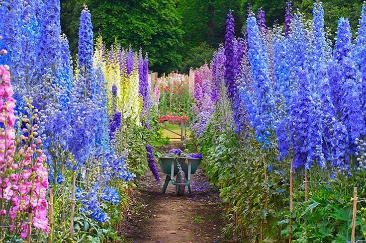 Delphiniums, English Cottage Garden  From the Backyard Diva.