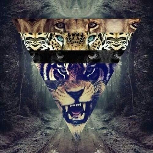 16 best epic images on pinterest wallpapers patterns and animales epic voltagebd Images