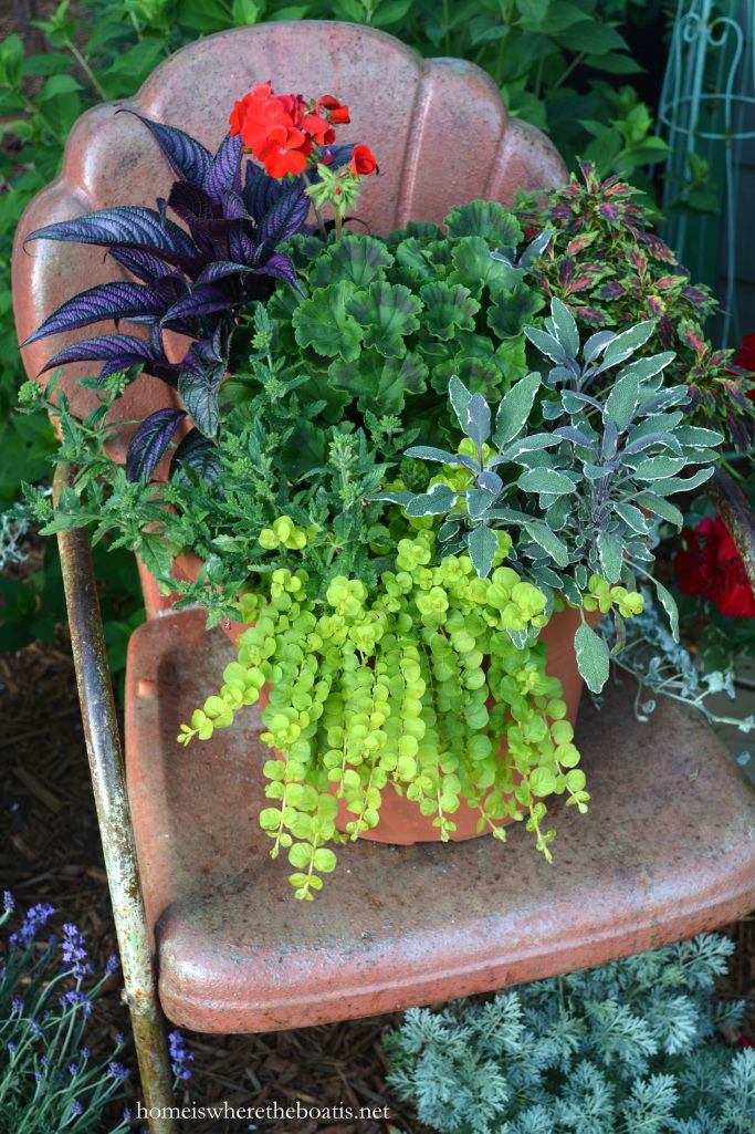 Persian shield plant, geranium, coleus, sage, creeping Jenny, verbena | homeiswheretheboatis.net #spring #garden