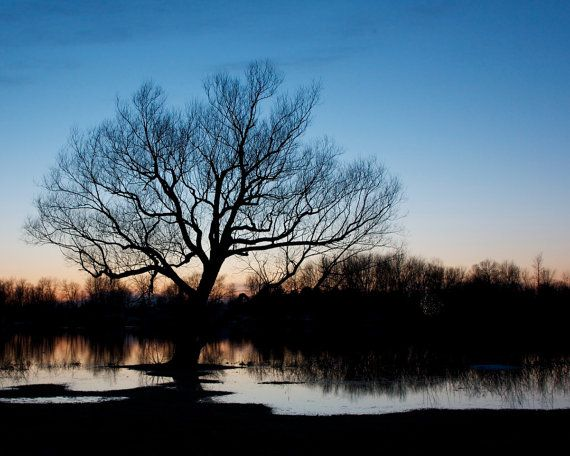 Beautiful Old Tree Sunset   Prints for sale by KaEPhotography on Etsy.