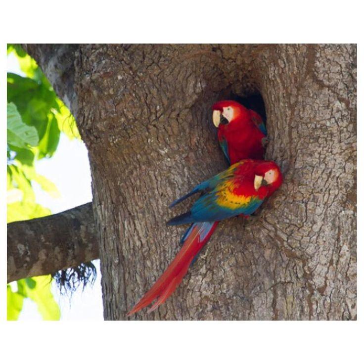 #honduras #roatan #island #coastal #wildlife #zipline #adventures #alifealive #exploremore #tbt #springbreak #outdoors #outsideculture #liveadventurously #travel #jungle #wander by irie.aries