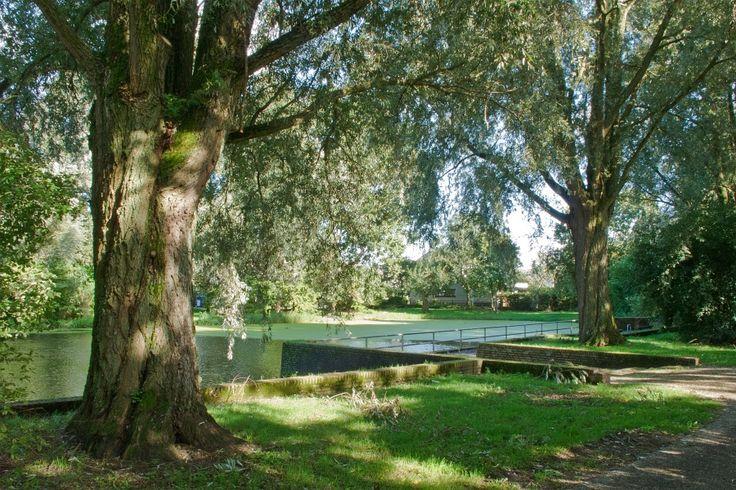 Hoorn, Risdammerhout
