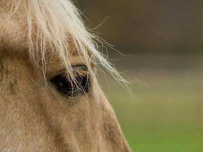 Volg Angelique haar reis en eerste ontmoeting met de grootmeester in de paardenwereld, Klaus Ferdinand Hempfling, in onderstaande blog. #TogetherWeInspire #Denemarken #horsemanship #Klaus Ferdinand Hempfling