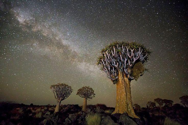 De vieux arbres éclairés par les rayons cosmiques sont l'objet du projet Diamond Nights par la photographe Beth Moon établie à San Francisco.