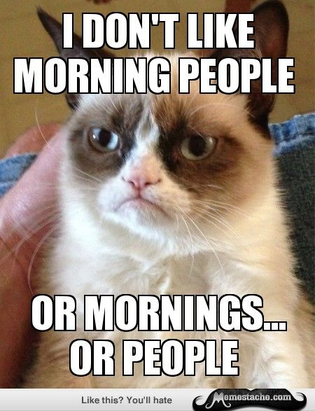 Oh Grumpy Kitty!