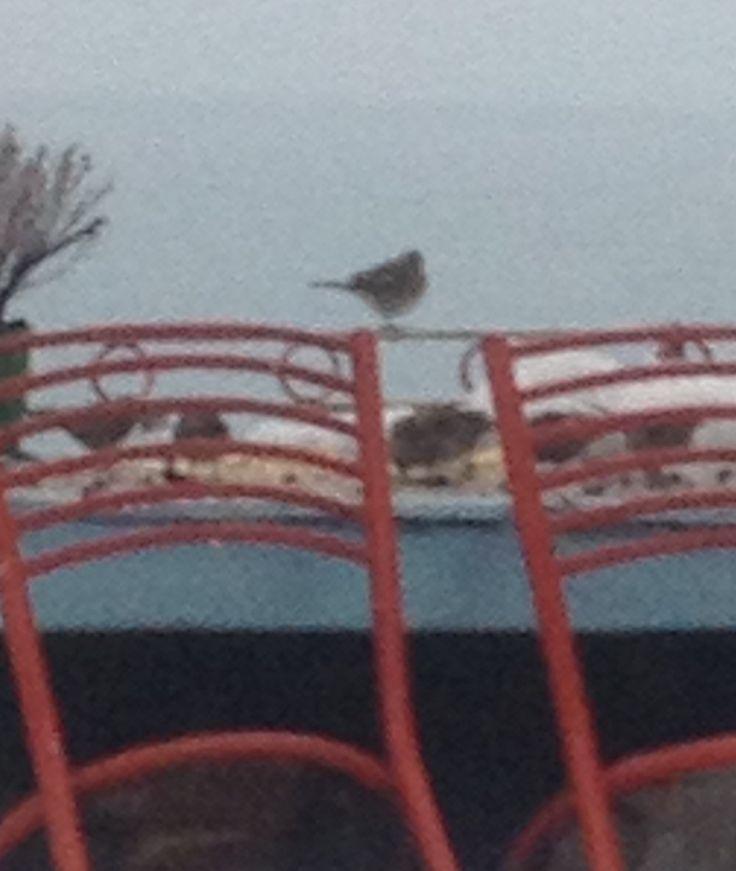 Karda masa BAŞINDA ziyafet çeken kuşlar.Bahçem de AMASRA