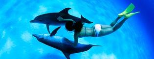 Dolphin Swim in Bahamas