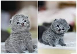 Картинки по запросу фиолетово -сиреневый котенок