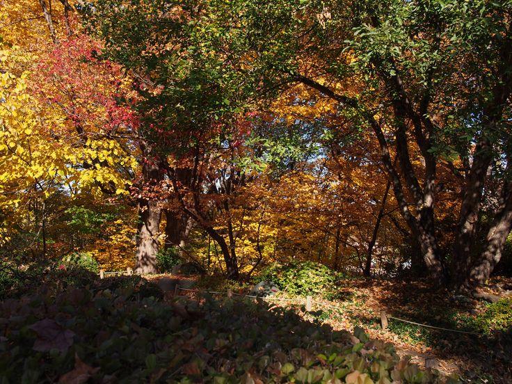 What a gorgeous fall day // Minnesota Landscape Arboretum