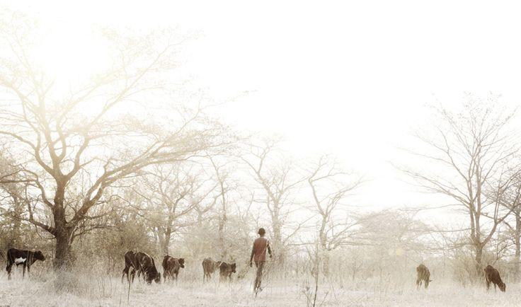 herdboy III