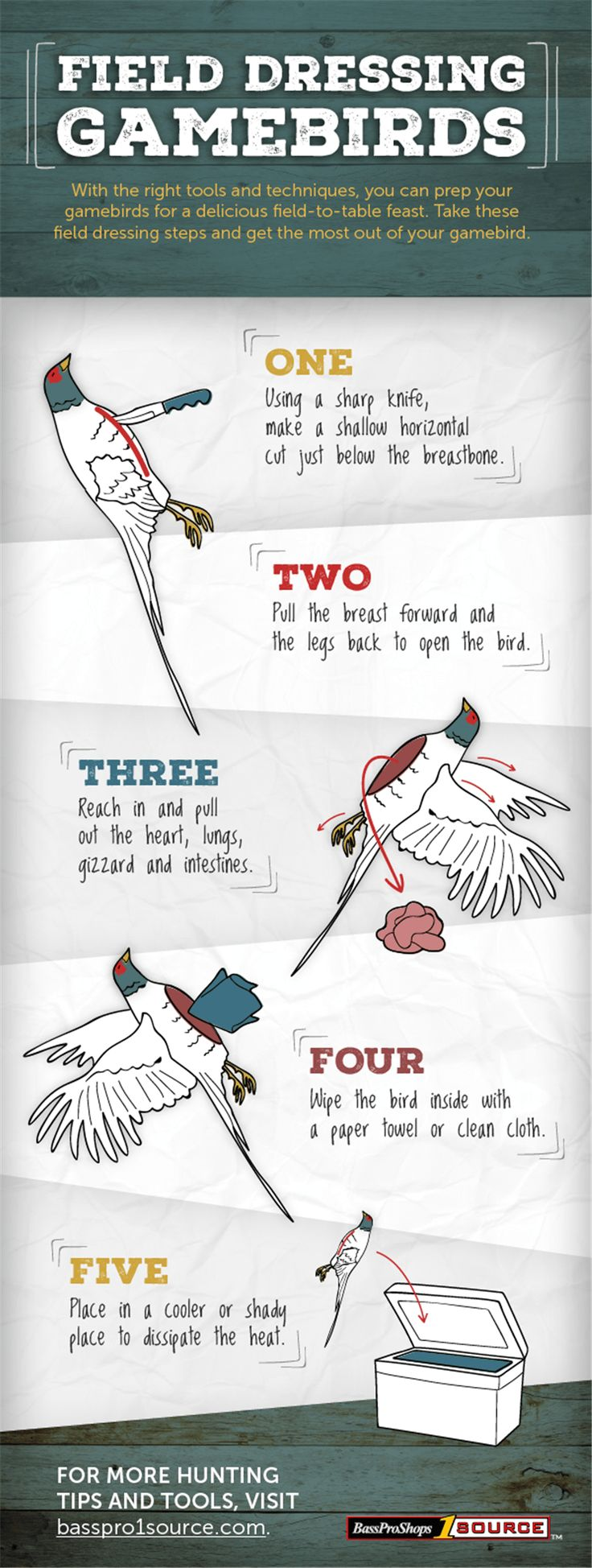 How to Field Dress Game Birds [INFOGRAPHIC] - Wide Open Spaces