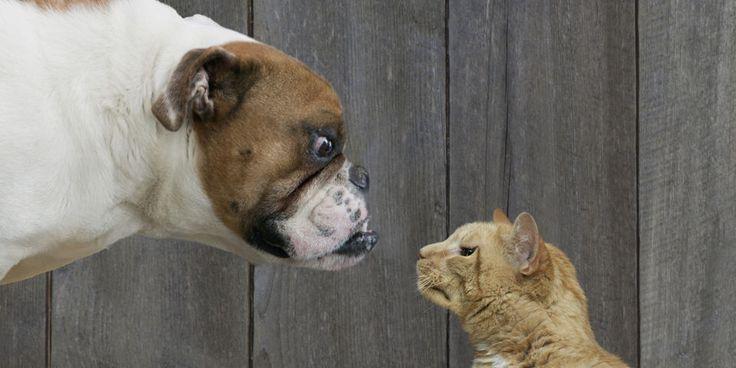 Владельцы кошек зарабатывают меньше хозяев собак.  #новости  #собаки  #коты  #интересное