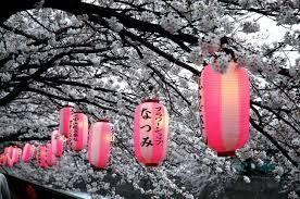 Znalezione obrazy dla zapytania kwitnące wiśnie w ogrodzie