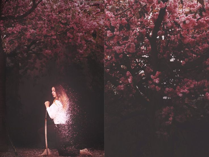 Botany series - Pink - Prunus serrulata Sakura by Kva-Kva.deviantart.com on @DeviantArt