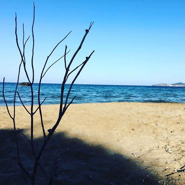 • Find your roots •   Spot: Aguas Blancas  #ibiza #diarioibizenco #morgattaenibiza