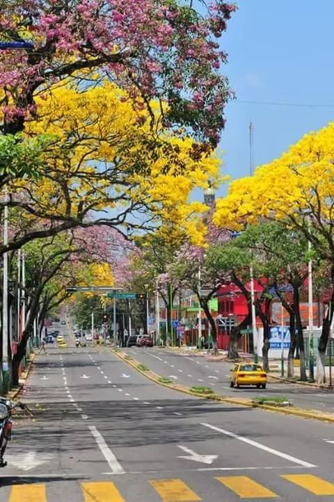 Paseo Tabasco - Villahermosa Spring #DriveMexico #Roadtrip #VisitMexico