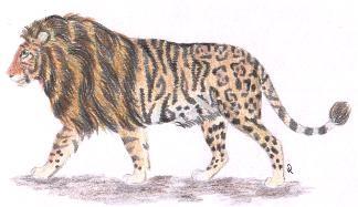 large cat hybrids
