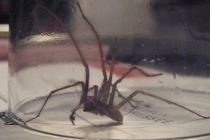 Natural Spider Killer ∙ How To by michelle G. on Cut Out + Keep