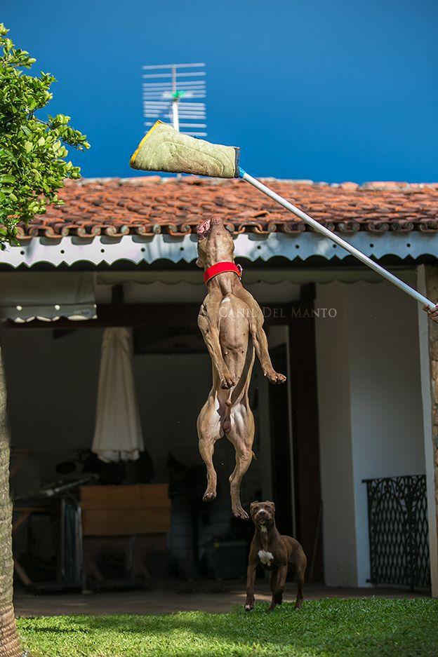 Castillo's Dogs