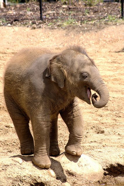 This guy, who's got the best joke to tell you. | 16 Baby Elephants We Would Like To Be Best FriendsWith