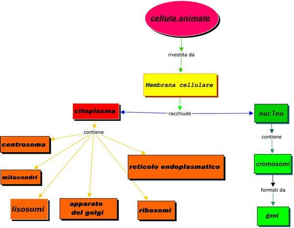 Progetto3T-Tessere-Tanti-Testi - La cellula animale